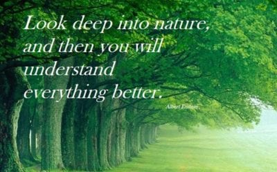 Einstein quote nature