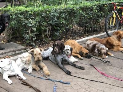 The dog park at Parque Mexico