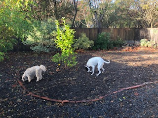 cleared-out garden